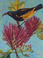 Hawaiian Bird III Fine Art Print
