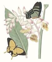 Les Papillons I Framed Print