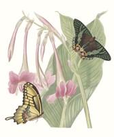 Les Papillons II Framed Print