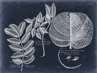 Foliage on Navy I Framed Print