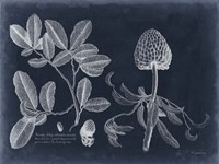 Foliage on Navy II Framed Print