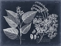 Foliage on Navy III Framed Print