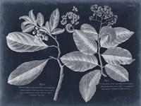 Foliage on Navy IV Framed Print