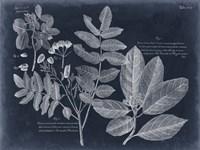 Foliage on Navy V Framed Print