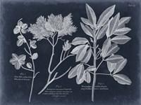 Foliage on Navy VI Framed Print
