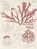 Antique Coral Seaweed IV Framed Print
