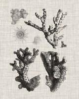 Coral Specimen I Fine Art Print