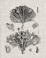 Coral Specimen III Fine Art Print