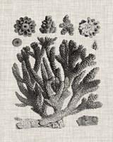 Coral Specimen IV Fine Art Print
