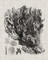 Coral Specimen V Fine Art Print