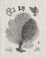 Coral Specimen VI Fine Art Print