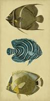 Trio of Tropical Fish III Framed Print