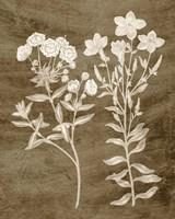 Botanical in Taupe I Fine Art Print