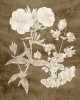 Botanical in Taupe II Fine Art Print