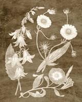 Botanical in Taupe III Framed Print