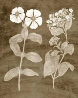 Botanical in Taupe IV Fine Art Print