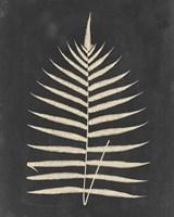 Linen Fern III Fine Art Print