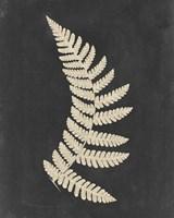 Linen Fern IV Fine Art Print