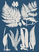Linen & Blue Ferns I Framed Print