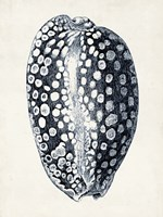 Coastal Collection in Indigo III Framed Print