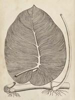 Distinctive Leaves II Framed Print