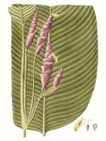 Leaves of the Tropics I Framed Print