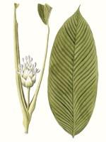 Leaves of the Tropics II Framed Print
