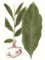 Leaves of the Tropics IV Framed Print
