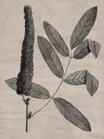 Eloquent Leaves I Framed Print