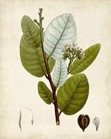 Verdant Foliage I Fine Art Print