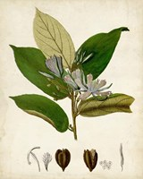 Verdant Foliage IV Fine Art Print
