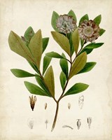 Verdant Foliage V Fine Art Print