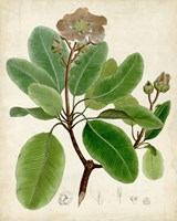 Verdant Foliage VI Fine Art Print