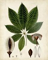 Verdant Foliage VII Fine Art Print
