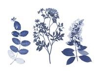Indigo Pressed Florals I Fine Art Print