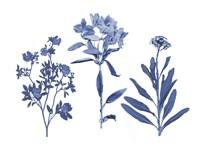Indigo Pressed Florals II Fine Art Print