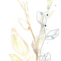 Botany Gesture VIII Framed Print