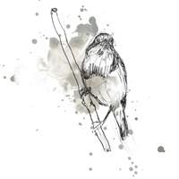 Gestural Bird Study III Fine Art Print