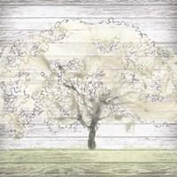 Barn Tree II Framed Print