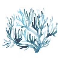 Azure Seafan III Fine Art Print