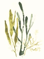 Kelp Collection I Framed Print