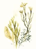 Kelp Collection II Framed Print