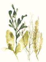 Kelp Collection III Framed Print