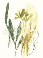 Kelp Collection VI Framed Print