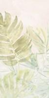 Tropical Sorbet II Framed Print