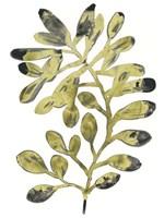 Foliage Fossil II Framed Print
