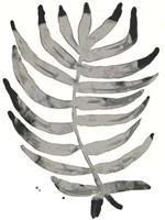 Foliage Fossil IV Framed Print
