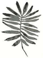 Foliage Fossil VII Framed Print