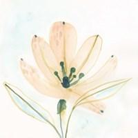 Garden Essence VI Fine Art Print