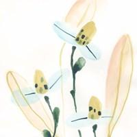 Garden Essence VII Fine Art Print
